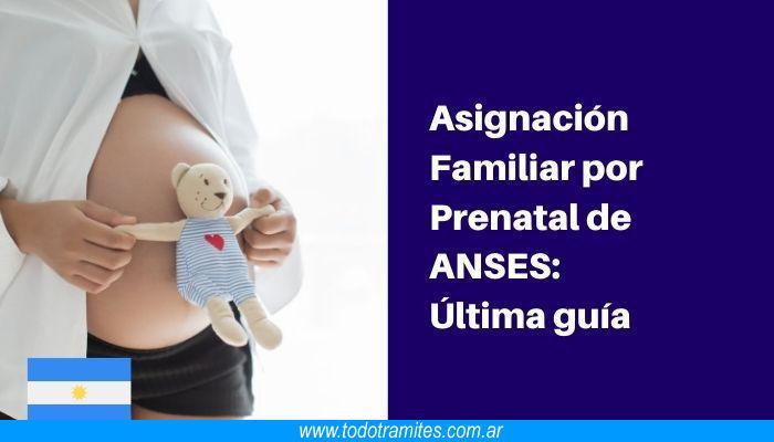 Asignación Prenatal de ANSES: Guía completa
